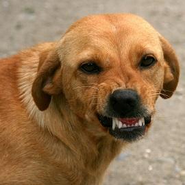 טיפול בבעיות התנהגות לכלבים