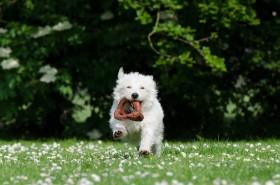 small-dog-750607_1280